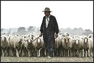 プロフィール 飼いならされた羊